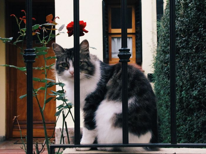 Domestic Cat Pets One Animal Animal Themes Domestic Animals Feline Mammal Cat Flower Sitting No People Plant Day Indoors  The Great Outdoors - 2017 EyeEm Awards Beauty In Nature The Street Photographer - 2017 EyeEm Awards Pet Portraits