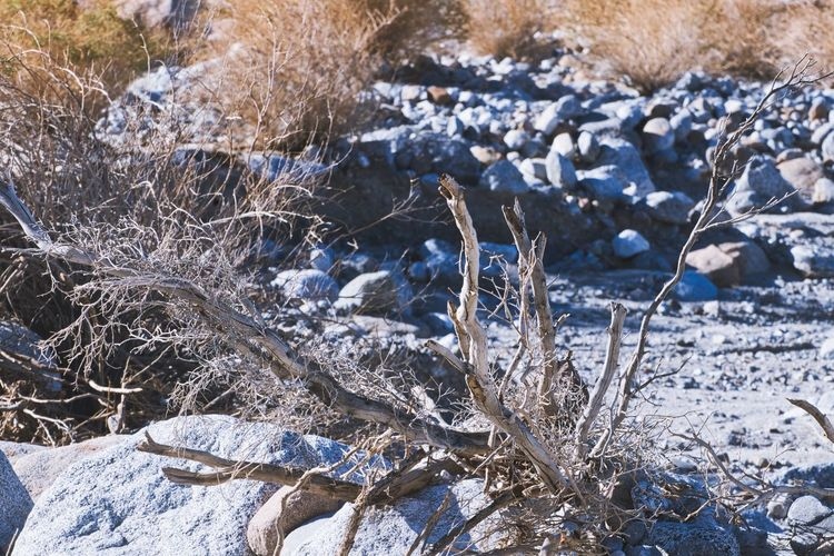Close-up of frozen plant on snow covered land