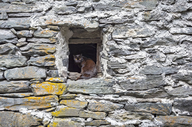 A cats is looking. Abandoned Animal Architecture Building Exterior Built Structure Cat Cats Damaged Day Italy Neugierig No People Outdoors Rural Rústico  Stone Tessin Ticino Village