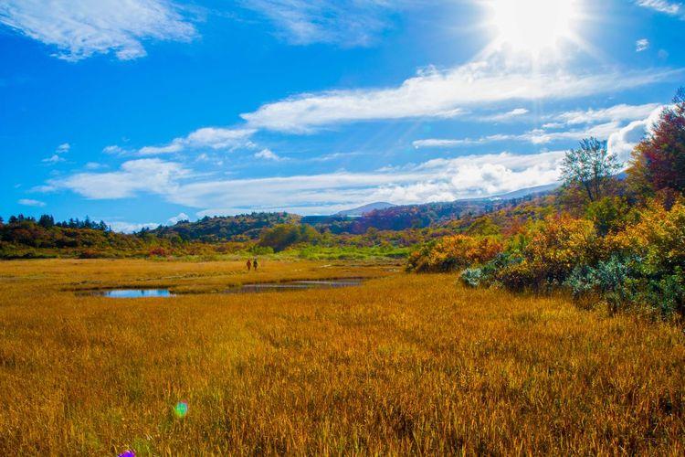 Autumn Leaves Landscape Marsh