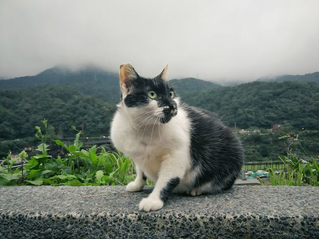 Cat and cloud Kitty Fog Foggy Morning Cat Cloud Mountain Sky And Clouds Pets One Animal Domestic Animals Animal Mammal Sitting Domestic Cat Animal Themes Dog Nature Outdoors Portrait No People Mountain Grass Day Sky