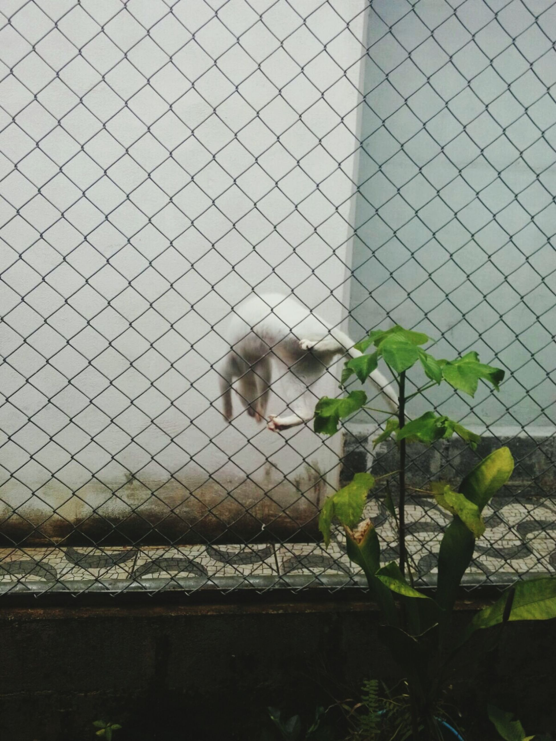water, built structure, chainlink fence, architecture, fence, building exterior, wall - building feature, protection, safety, day, outdoors, nature, plant, sea, no people, metal, security, sky, wall, growth