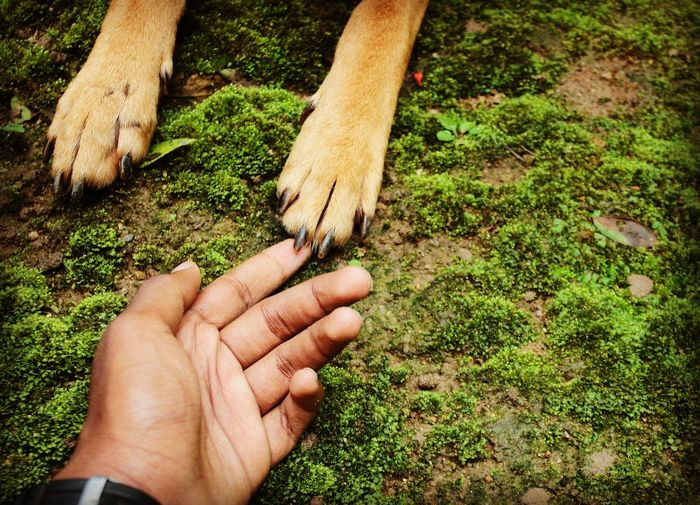 Cropped hands of man touching paw on grass
