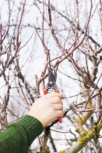 Close-up of hand cutting tree with pruning shears against sky