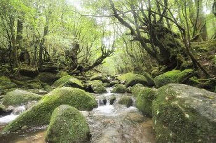 屋久島 for ign yakusima