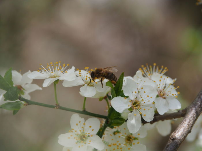 Close-up of bee pollinating flower
