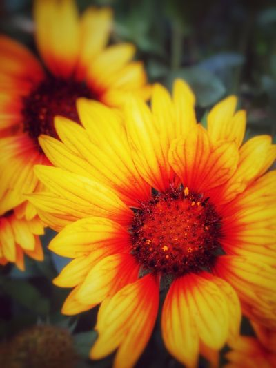 #flower#yellow#r