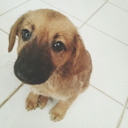 Aki. our New Family Member :) Dog Cute Brown