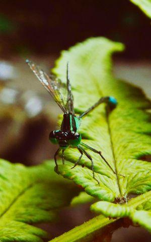 Libellule Photography Nature Sun Garden Shadow Green Macro Insect