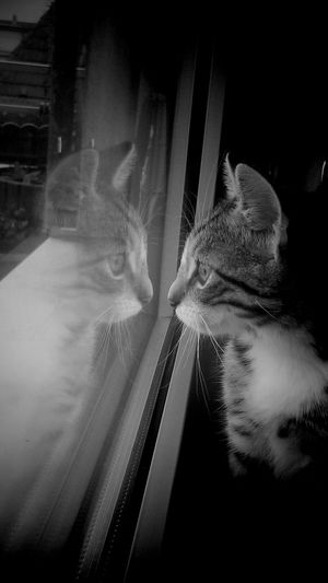 Cat Refelection - Monochrome_Photography Black And White TakeoverContrast Dramatic Angles EyeEm Gallery Showcase October Creativity Animal Cats Of EyeEm Cat My Photos Adis Art EyeEm Best Shots Berlin, Germany  Fine Art Atmospheric Reflection EyeEm Best Edits Animal Photography Animal Love Coincidedence Photography Shadow Window Reflections Capture Berlin Finding New Frontiers Adapted To The City Lieblingsteil Miles Away Uniqueness The City Light Welcome To Black EyeEmNewHere EyeEm Diversity Resist Long Goodbye The Secret Spaces Art Is Everywhere Break The Mold TCPM The Architect - 2017 EyeEm Awards The Photojournalist - 2017 EyeEm Awards The Portraitist - 2017 EyeEm Awards Neighborhood Map Visual Feast BYOPaper! Live For The Story Place Of Heart Let's Go. Together. Sommergefühle EyeEm Selects Breathing Space The Week On EyeEm Investing In Quality Of Life Mix Yourself A Good Time Berlin Love Pet Portraits Paint The Town Yellow Discover Berlin Been There. Second Acts Perspectives On Nature Rethink Things Postcode Postcards Be. Ready. Black And White Friday Step It Up One Step Forward Crafted Beauty EyeEm Ready   AI Now Shades Of Winter An Eye For Travel Colour Your Horizn Press For Progress Stories From The City Inner Power This Is Queer #FREIHEITBERLIN 50 Ways Of Seeing: Gratitude