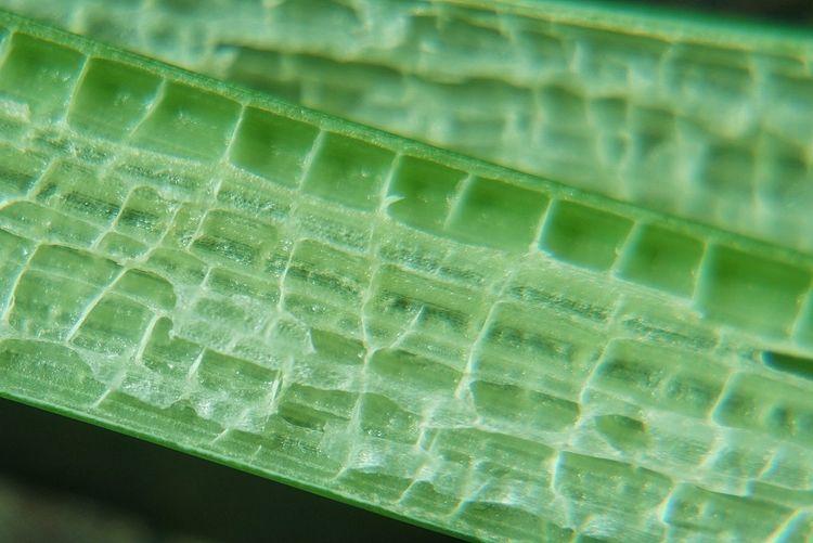 Close-up Green