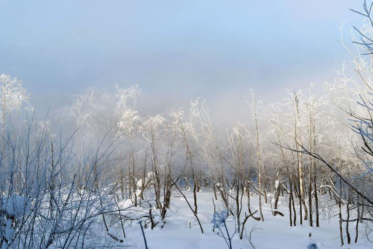 Misty morning Beauty In Nature Cold Temperature Day Growth Mist Nature No People Outdoors Sky Snow Tranquility Tree Winter