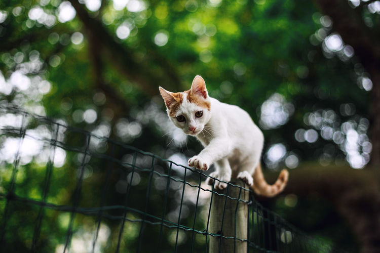 Low angle portrait of cat walking on fence against trees