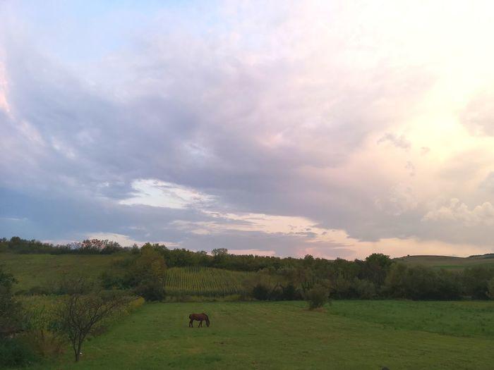 Tree Sunset Agriculture Field Sky Grass Cloud - Sky Landscape