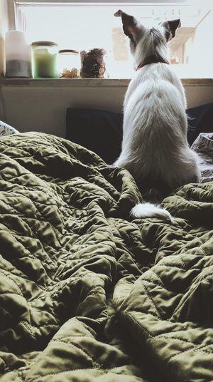 🐶 Pets Domestic Animals Indoors  One Animal Animal Themes Domestic Cat Mammal