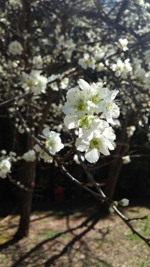 My Back Yard Flowers Nature EyeEm Nature Lover n