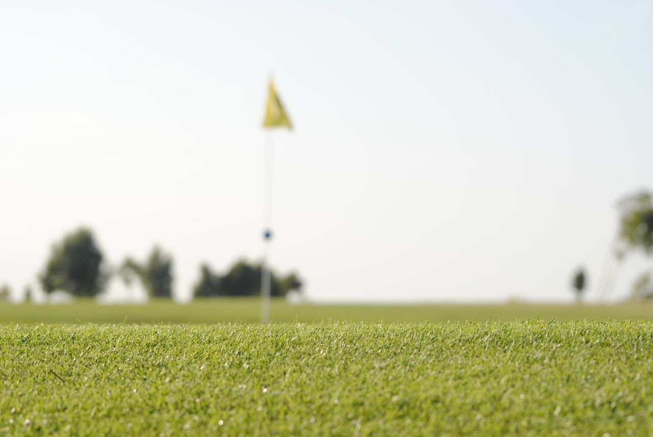 plant, grass, field, green color, sport, land, sky, nature, day, growth, no people, focus on foreground, golf course, selective focus, clear sky, copy space, outdoors, golf, green - golf course, beauty in nature