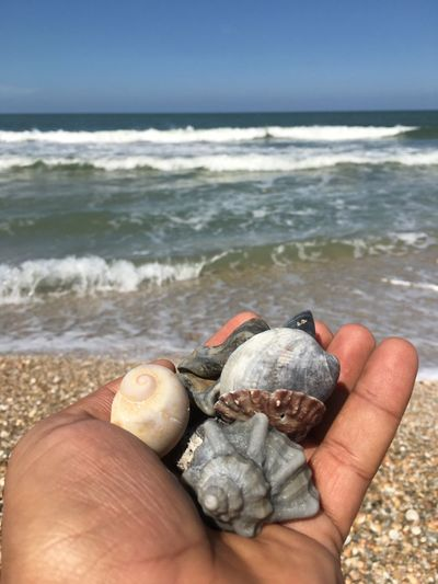 Cropped image of hand holding shells on beach