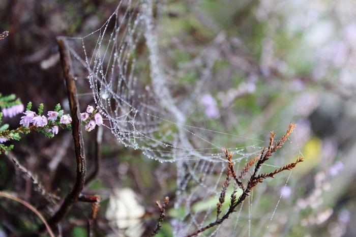 Spider Web Close-up Flower Web Drop Nature Fragility Outdoors Freshness EyeEmNewHere The Great Outdoors - 2018 EyeEm Awards The Still Life Photographer - 2018 EyeEm Awards