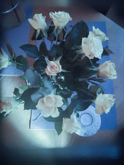 High angle view of flowering plant in vase on table