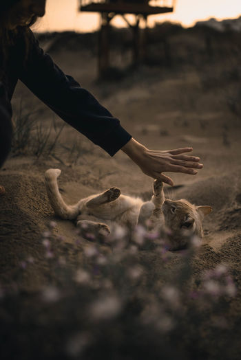 Animal Wildlife Day Domestic Domestic Animals Hand Human Body Part Human Hand Land Mammal Nature One Animal One Person Outdoors Pets Real People Selective Focus Vertebrate EyeEmNewHere This Is Family