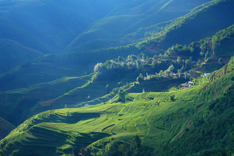 Beautiful landscape of mountain range with beam light in morning at Hongtudi in Dongchuan, Yunnan, Kunming of China Scenics - Nature Green Color Beauty In Nature Tranquil Scene Environment Landscape Plant Tranquility No People Land Mountain Non-urban Scene Nature Growth Tree Idyllic Field Agriculture Day Lush Foliage Outdoors Rolling Landscape China Village