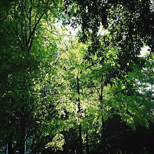 Foglie Trees Green Park