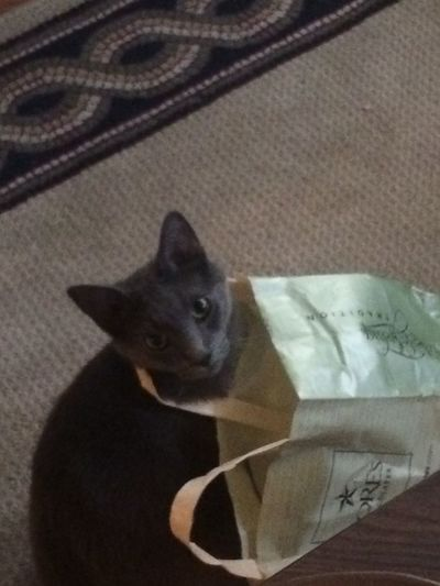 Capture The Moment Cat In Bag