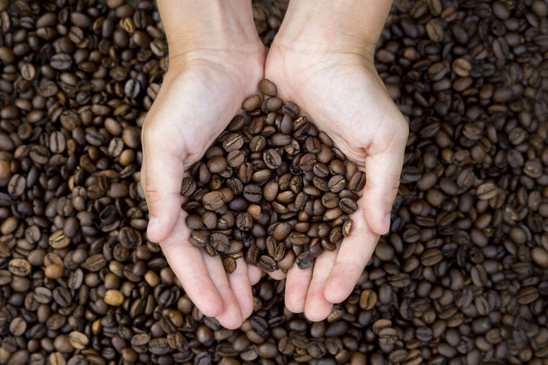 Copped hands of woman holding coffee beans