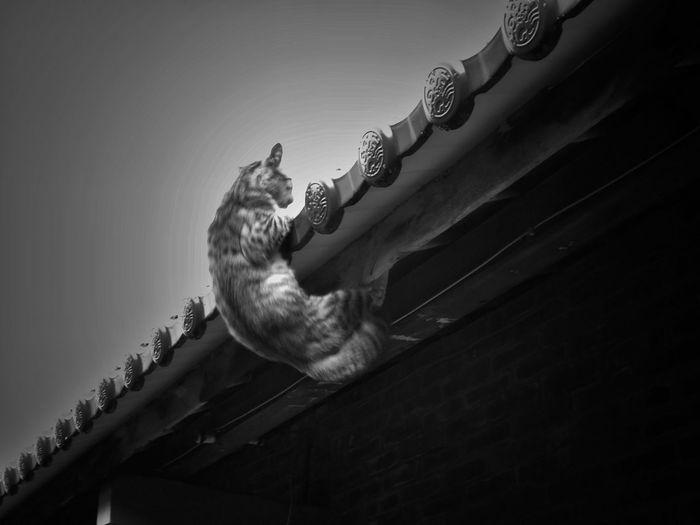 2017/4/1 街拍獵影~~奮力一攀 於社頭 Cat Cats Of EyeEm Cats Taiwan Countryside Country Country House Country Life Country Living Bw Bw_lover BW_photography B&w Photo B&w Bw Photography B&w Photography Bwphotography Streetphotography Street Street Photography Streetphoto_bw Street Scene Streetphotography_bw EyeEmNewHere