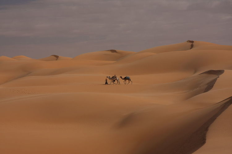 View of a desert with camels