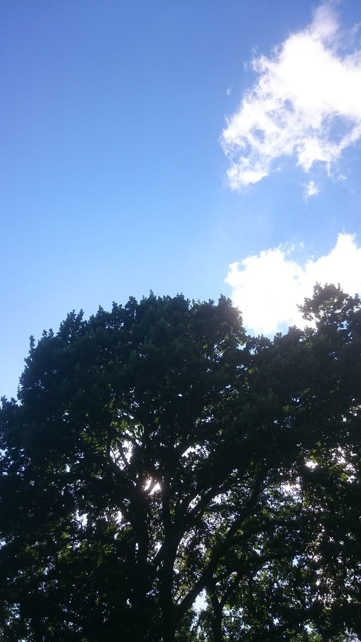 tree, low angle view, nature, tranquility, no people, sky, growth, day, beauty in nature, outdoors, forest, clear sky