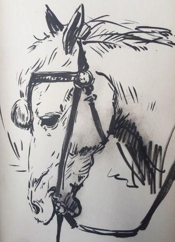 Horse Drawing Drawings
