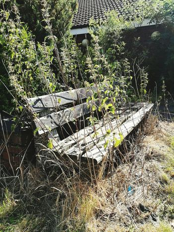 Nature Sunlight Tranquil Scene Bench Forgotten Things Nature Taking Over Again
