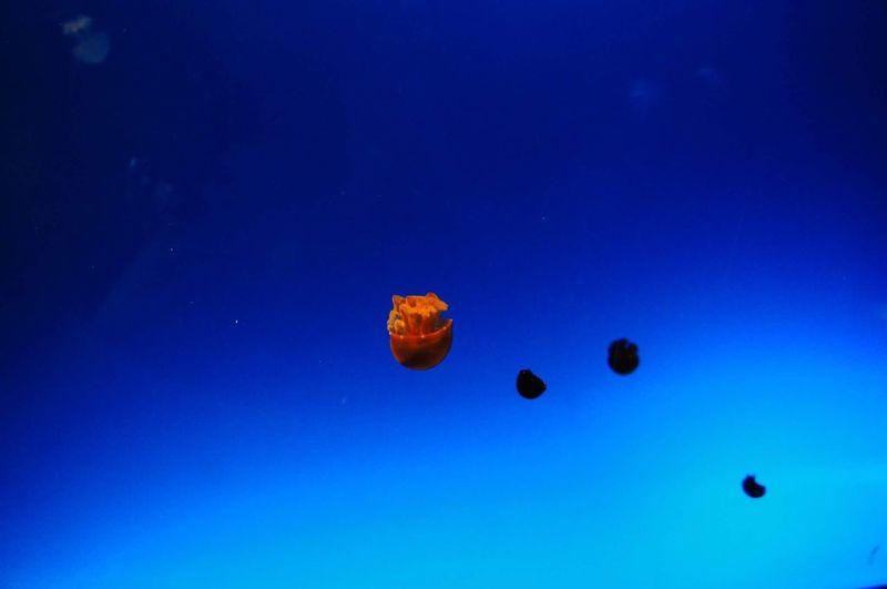 Blue Nature Jellyfish Water Deep Blue Sea EyeEmNewHere EyeEmNewHere