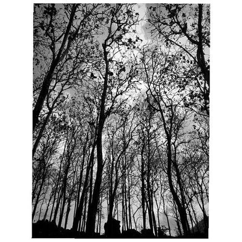 Dry season Dry Woods Dryforest Goalowotrenggalek INDONESIA 1000kata Natgeotravel Natgeoindonesia Nationalgeographic Instalike Instagram Instagood Instadaily Instamood