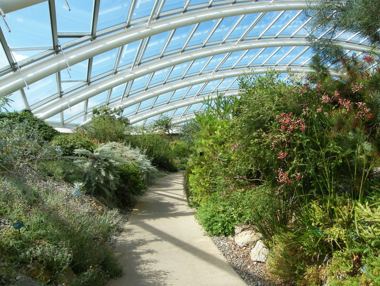 Agriculture Botanical Gardens Botany Day Garden Garden Photography Glass House Glass Roof Greenhouse Hothouse Hothouse Flowers Modern Architecture Nature Outdoors Plant Plants Steel Structure  Windows