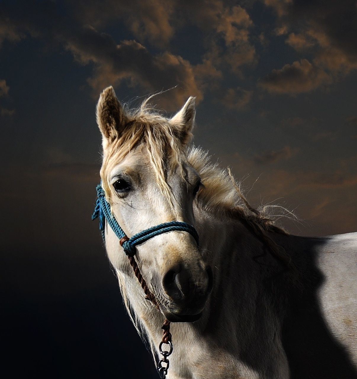 White Horse Against Sky