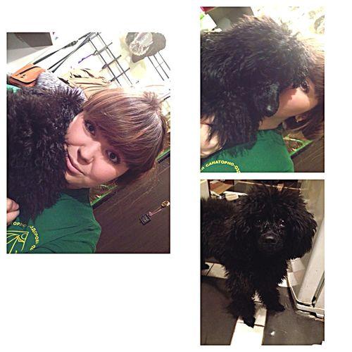 пудель лола Dogs Pudel I Love My Dog Dog Люблюживотных Nature Animals я