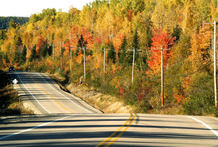 No People Outdoors Woods Forest Late Summer Late Summer Colours Orange Leaves Canada Road Diminishing Perspective Nature Transportation Street Highways&Freeways Trees Tranquility Where To Go From Here