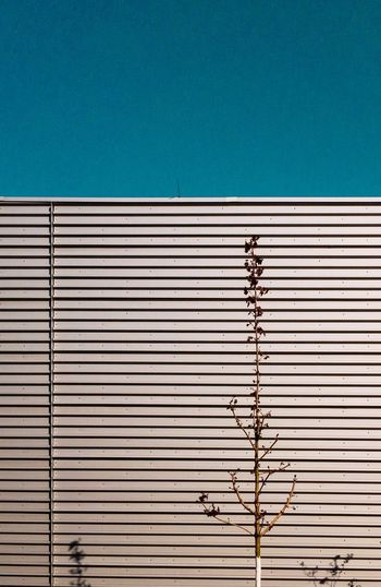 minimal architecture IPhoneography Minimalism Copy Space Architecture Built Structure Metal Pattern Wall - Building Feature No People Corrugated Iron Textured  Sunlight Blue Wall Backgrounds