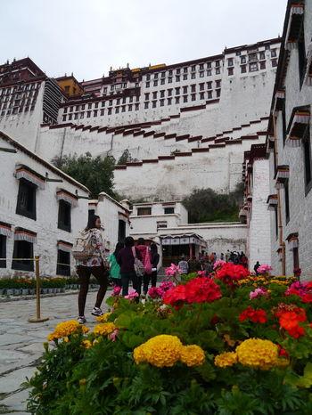 Monastery Monastry Potala Potala Palace Potalapalace  Tibet Tibetan  Tibetan Buddhism