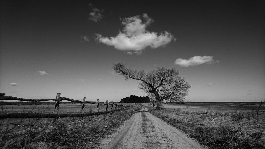 Sky Sky And Clouds Masuria In Polish Tree Blacj And White Route Fence Fields Landscape