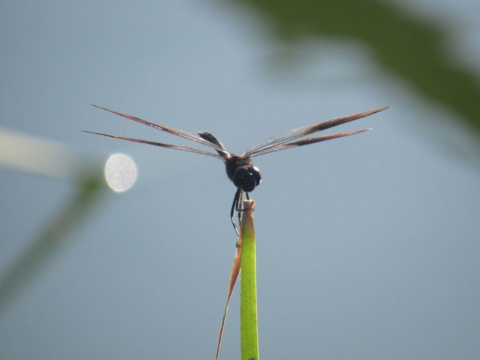 Close-up of damselfly on leaf against sky