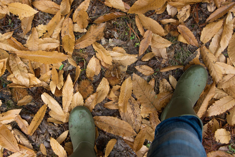 Albania Autumn Copy Space Rain Boots Rainy Days Wellington Boots Above Autumn Change Close-up Day Forest High Angle View Human Body Part Leaf Low Section Nature One Person Outdoors People Personal Perspective Real People Rubber Boots Season  Top View