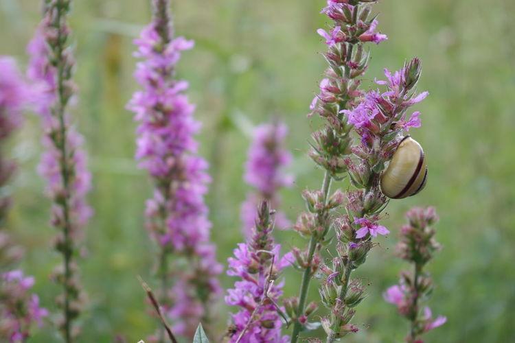 Close-Up Of Purple Flowers