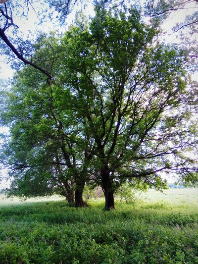 Tree Growth Green Color Nature Beauty In Nature No People Grass Day Field Branch Outdoors Tranquility Low Angle View Scenics Sky Freshness Flower