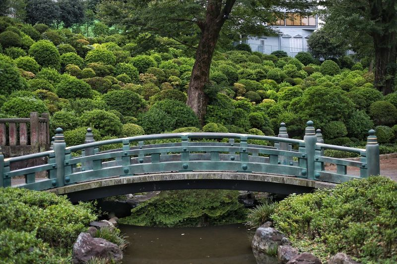 Bridge Tokyo Buddhist Temple Outdoors Trees Bushes Nature Water Bridge - Man Made Structure Bridge Plant Tree Growth Architecture Green Color Built Structure Nature Park Park - Man Made Space Water No People Building Exterior Day Garden Formal Garden Bridge Outdoors Hedge Fountain Ornamental Garden