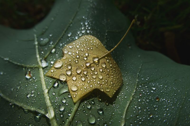 Water Plant Part Leaf Drop Wet Close-up Plant Focus On Foreground Outdoors Nature Fragility Beauty In Nature Selective Focus No People Dew Growth RainDrop Day