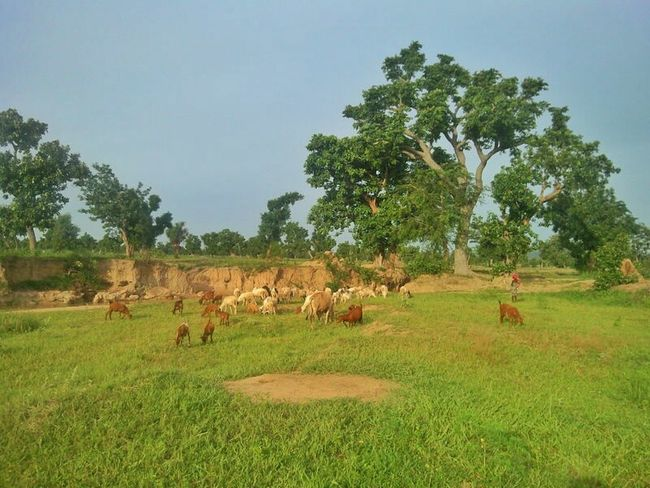 Grazing Terra Natura Rainyseason Landscape_Collection